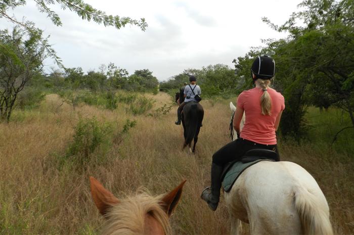 Horse back safari's